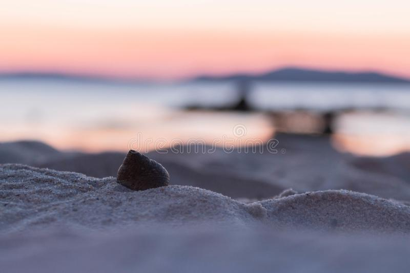 Skorupa w piasku obraz stock
