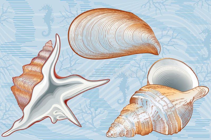skorupy ilustracja wektor