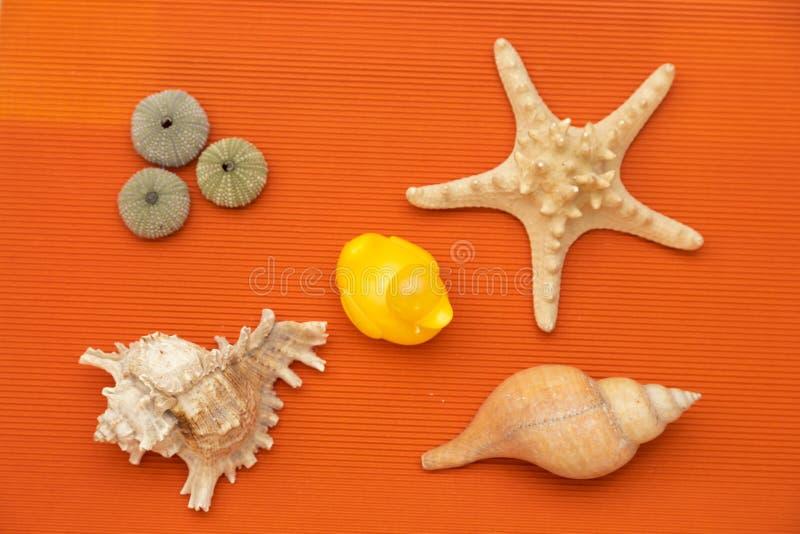 Skorupy i żółty kaczątko na pomarańczowym tle fotografia stock