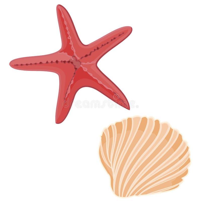 Skorupy i rozgwiazdy ilustracji