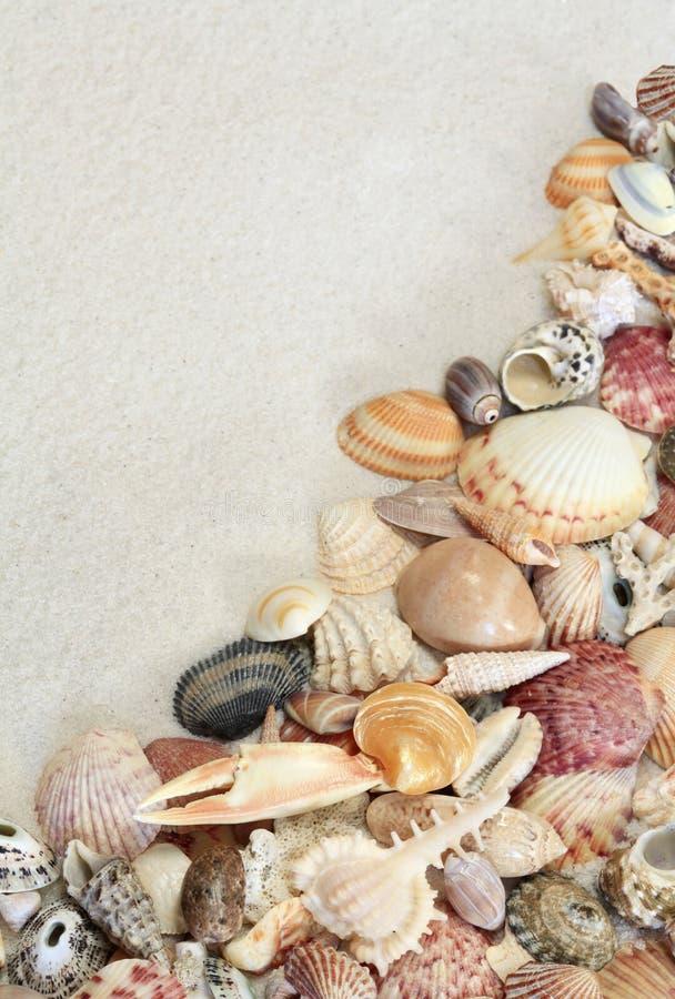 Skorupy na Białej piasek plaży fotografia royalty free