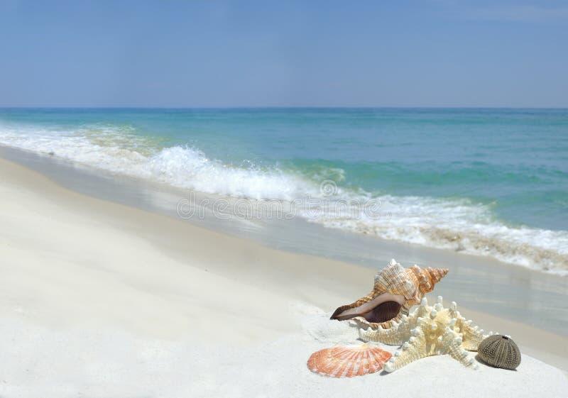 Skorupy na Pięknej Białej piasek plaży fotografia stock