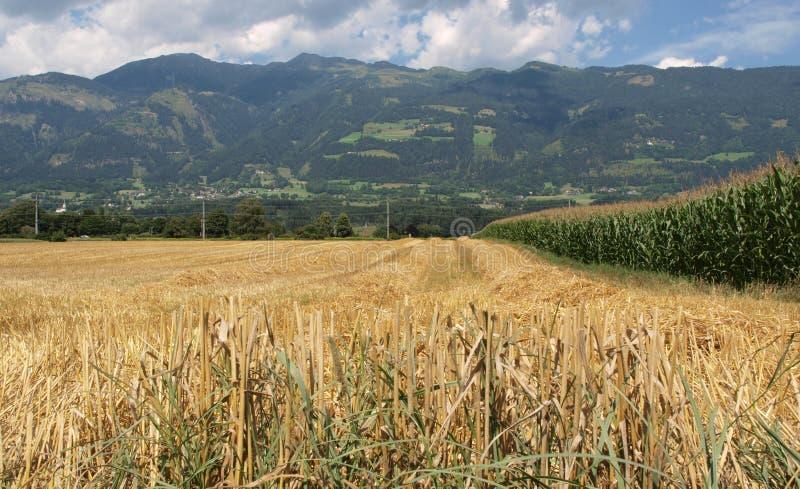Skoszony pole, Drautal, Austria obrazy royalty free