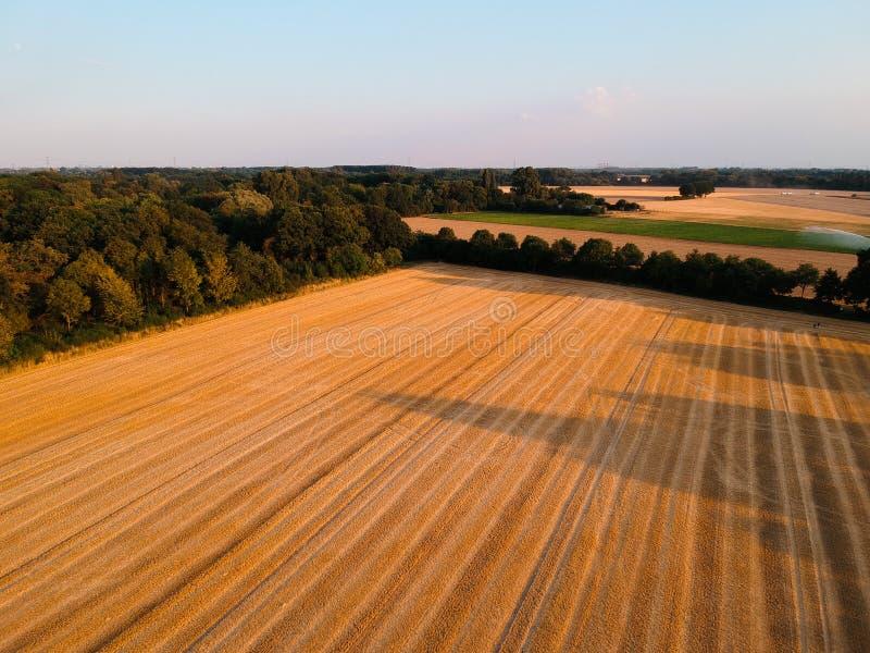 Skoszony pole w Niemcy z ?adnym niebieskim niebem i drzewami w tle obraz royalty free