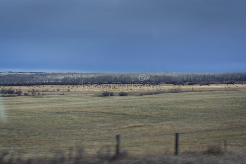 Skoszony siana pole w Manitoba z dalekim widokiem przy siano belami obraz royalty free