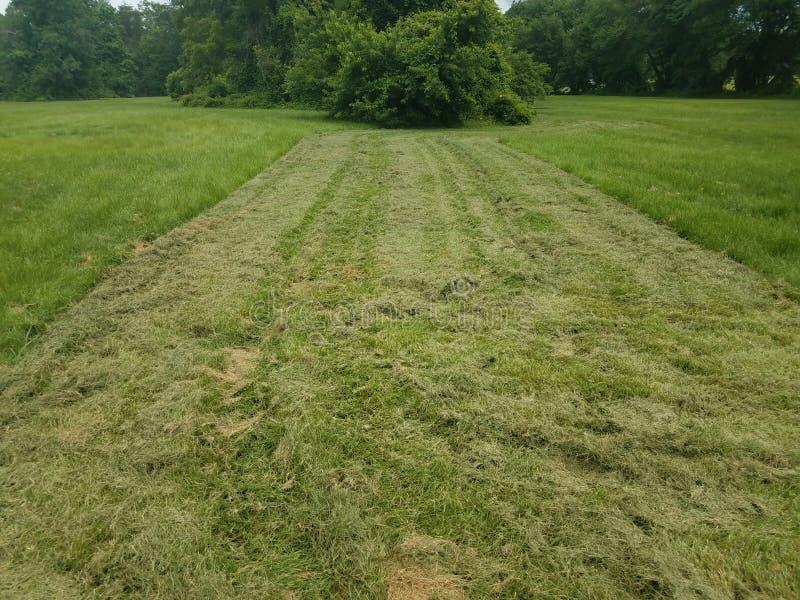 Skoszony zielonej trawy jard lub gazon zdjęcia stock