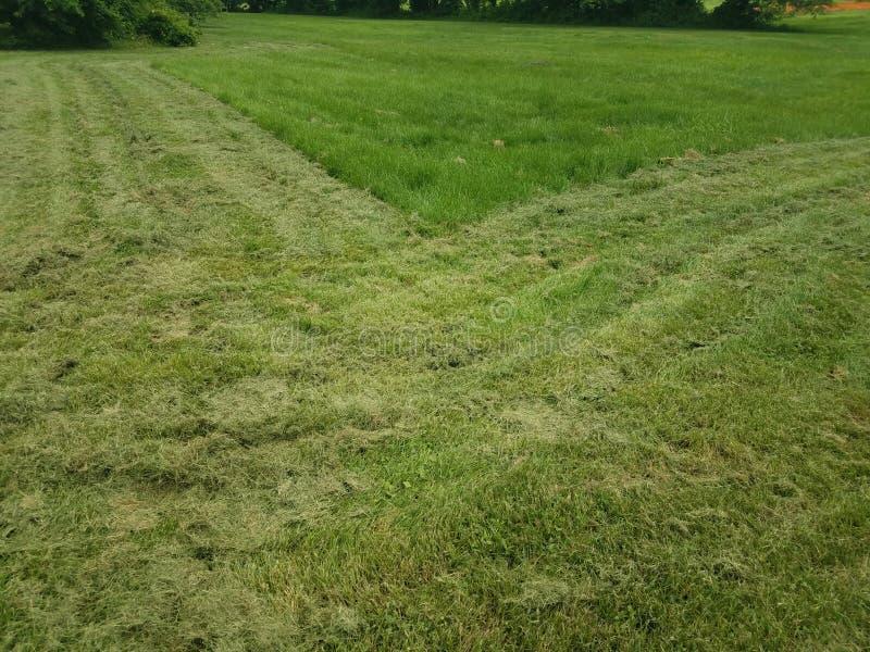 Skoszony zielonej trawy jard lub gazon obrazy royalty free
