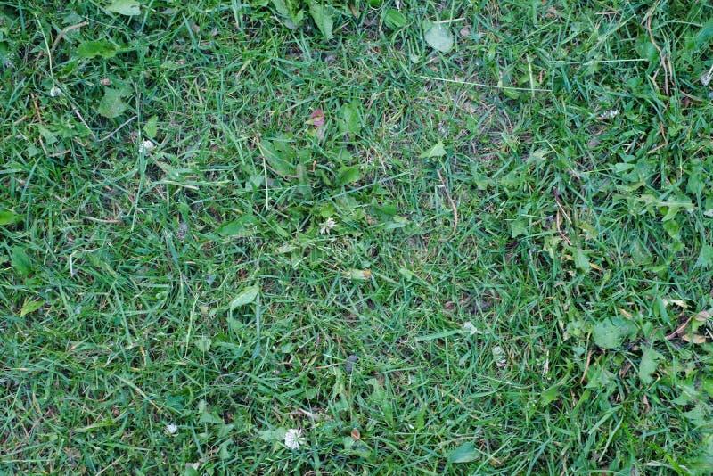 Skoszony zielonej trawy tło obraz royalty free