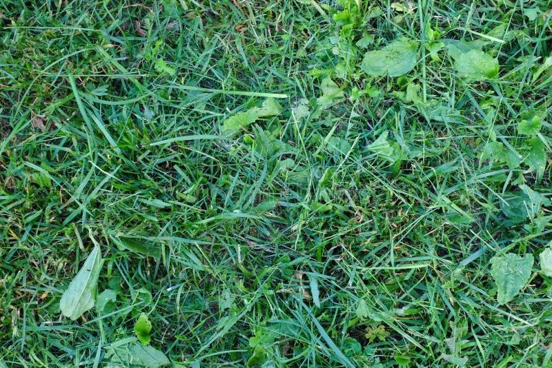 Skoszony zielonej trawy tło zdjęcie stock