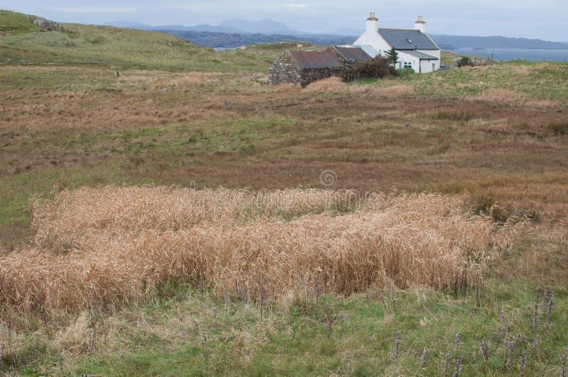 Skotsk jordlapp arkivfoto