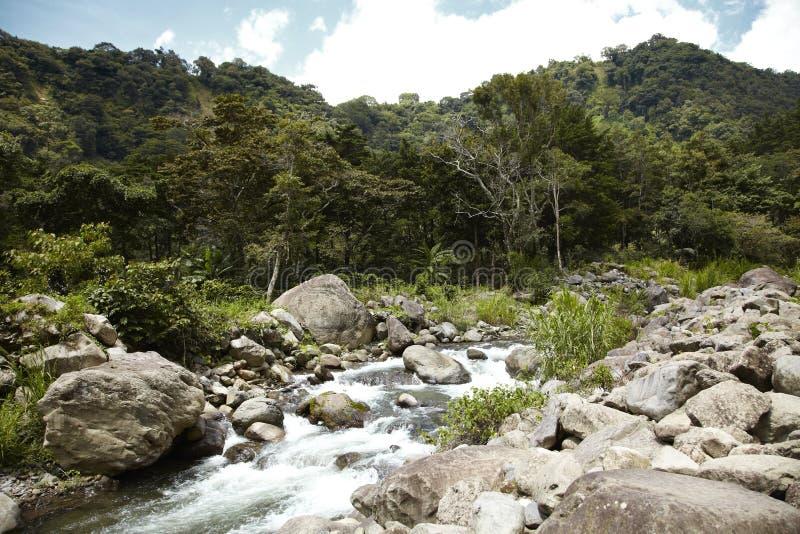 Skotska högländerna Boquete, Chiriqui, Panama1 fotografering för bildbyråer