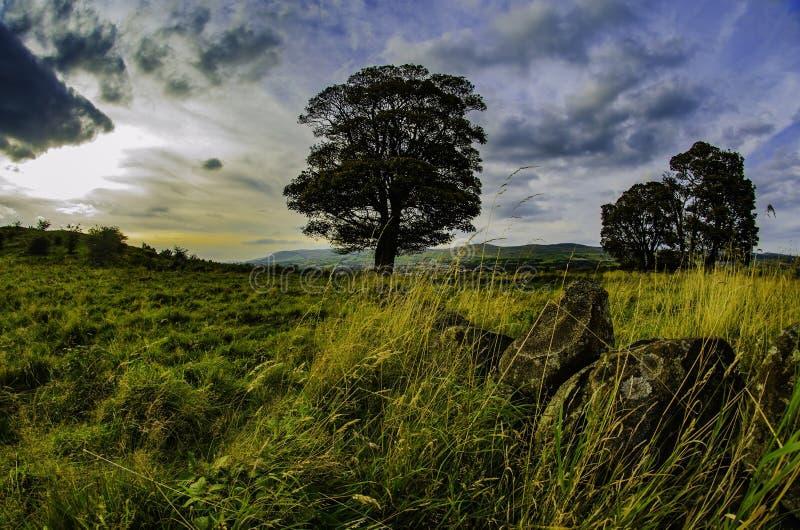Skotska kullar fotografering för bildbyråer
