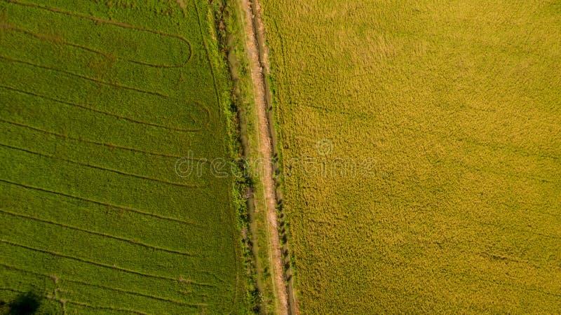 Skott för flyg- sikt från surret av de härliga risfältfälten med gröna unga groddar, i att bruka den organiska skörden med ris arkivbilder
