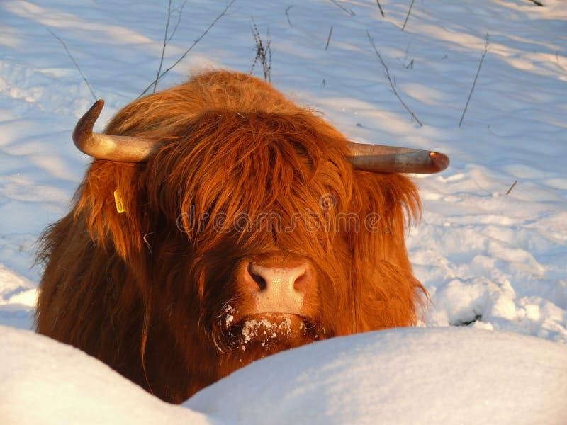 Skotte Gaelic Highland arkivfoto