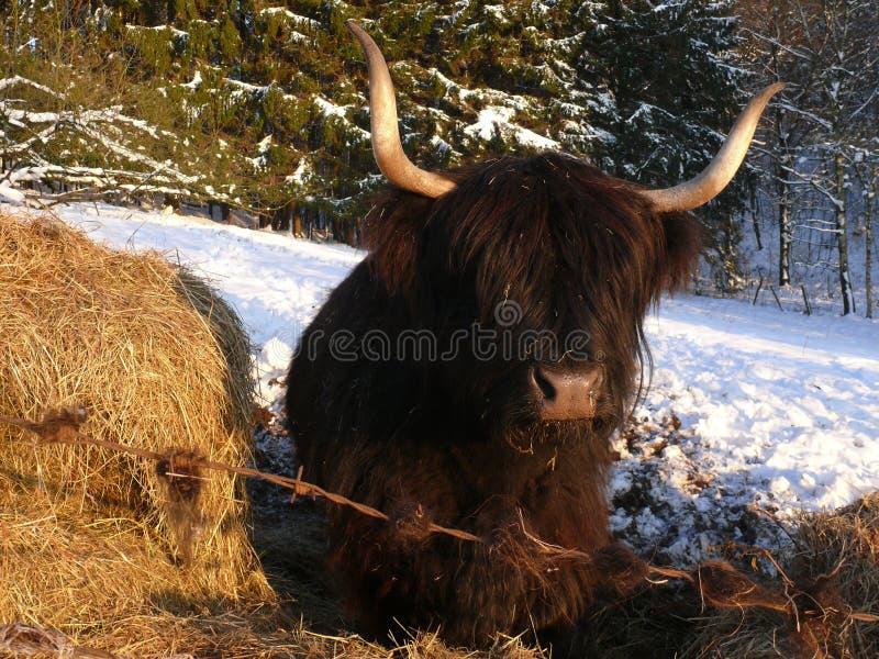 Skotte Gaelic Highland arkivbild