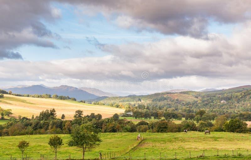 Skottland backe med hästar, berg och träd royaltyfri foto