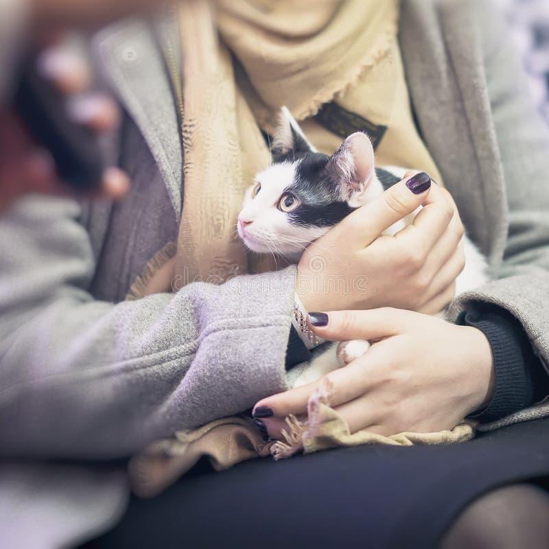 Skrämd kattunge i händerna av flickavolontären, i skyddet för hemlösa djur Flickatagandekatt till henne hem fyrkant royaltyfri foto