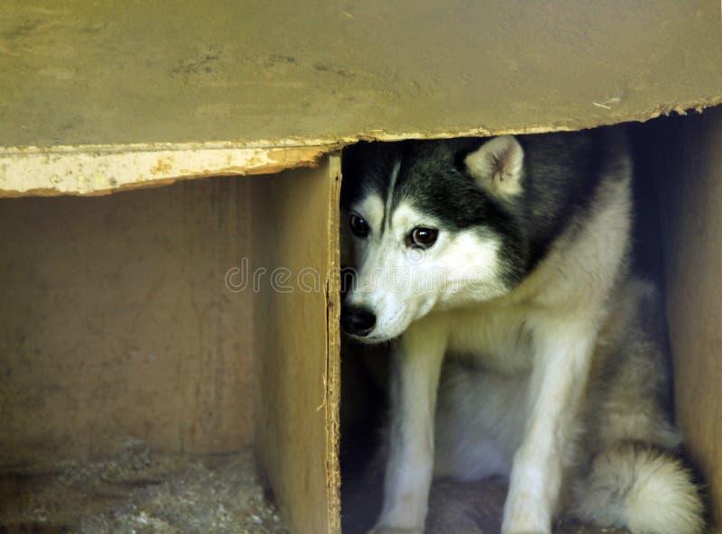Skrämd tillfällig hund royaltyfri bild