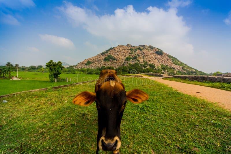 Skrämma att posera på det Gingee fortet i södra Indien royaltyfria bilder