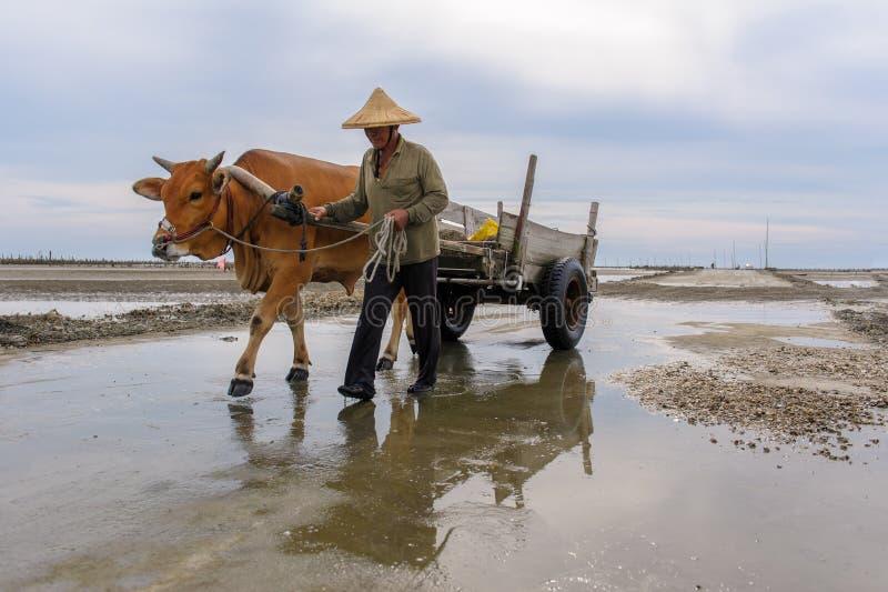 Skrämma vagnen på stranden för att välja ut ostron fotografering för bildbyråer