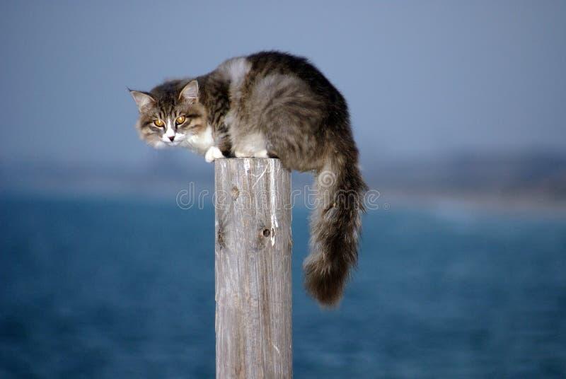 skrämmd katt royaltyfri foto