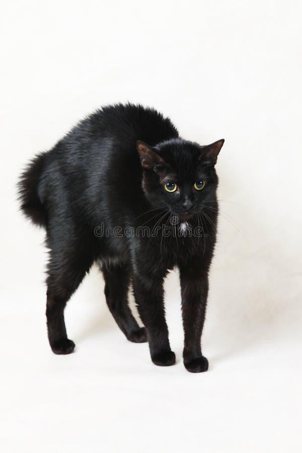 skrämmd svart katt royaltyfria foton