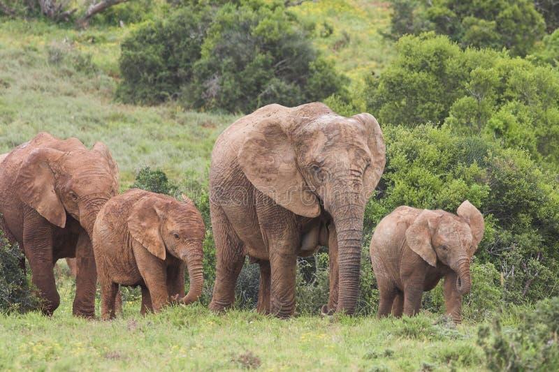 skrämmer elefanten arkivfoto