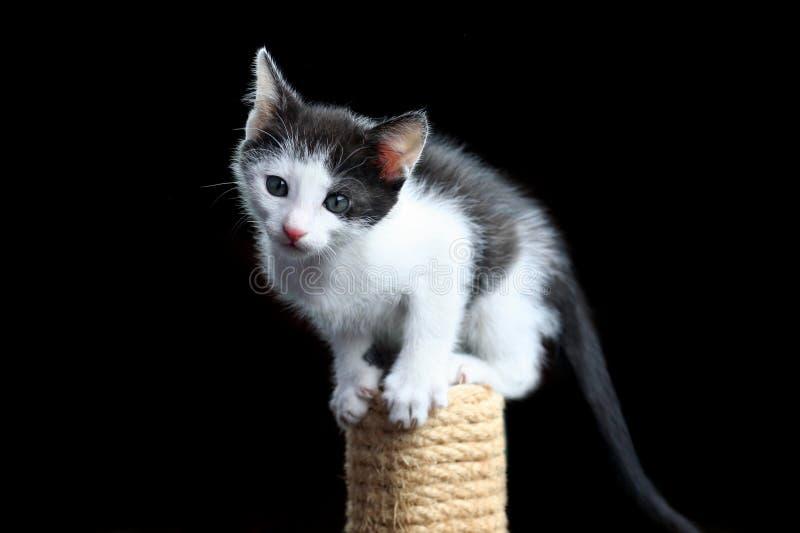 skrapa för kattstolpe royaltyfri fotografi