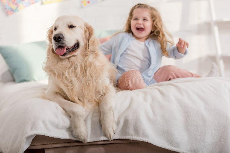 skratta den förtjusande ungen och gulliga golden retriever som tillsammans sitter på säng royaltyfri foto