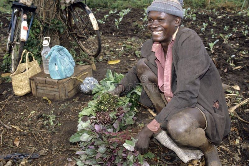 Skratta den ugandiska bonden i grönsakfält royaltyfri foto