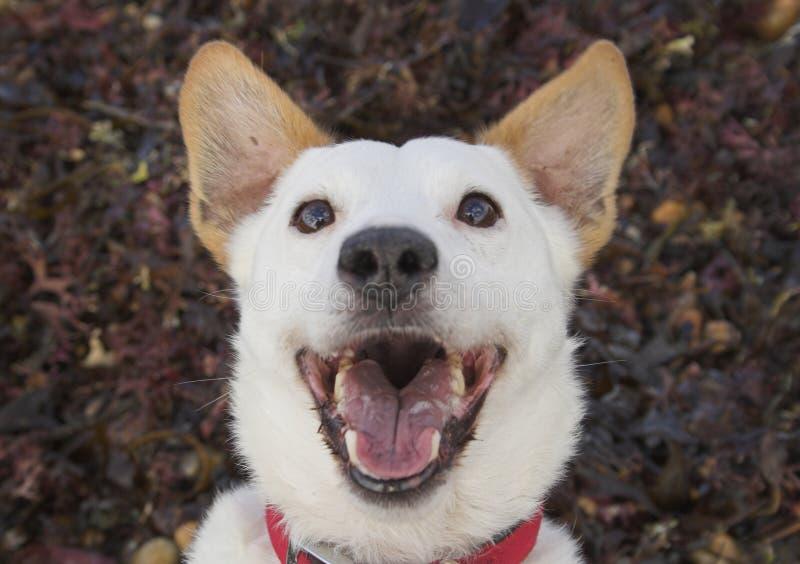 skratta för hund royaltyfri fotografi