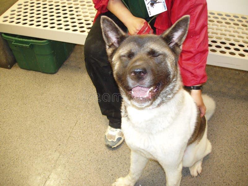 skratta för hund royaltyfri bild