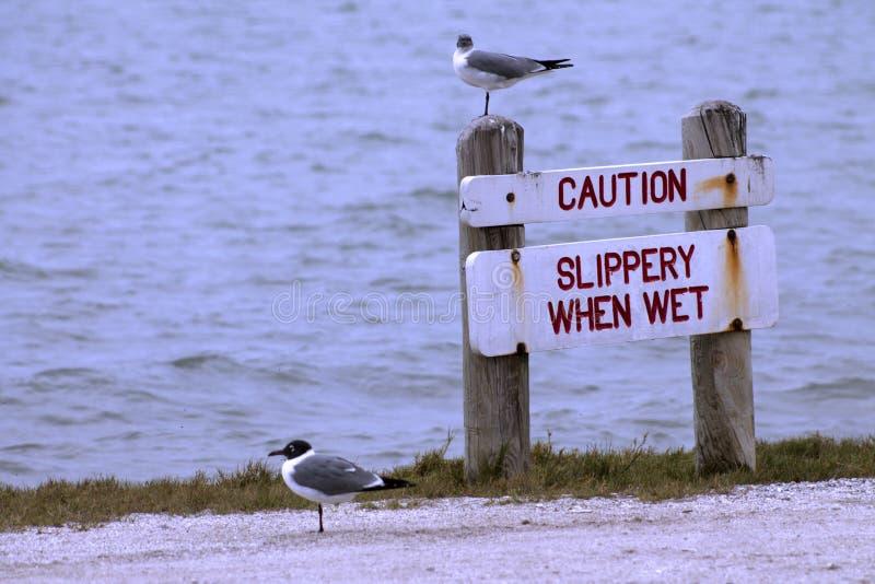 Skratta fiskmåsar och varningstecknet royaltyfri bild
