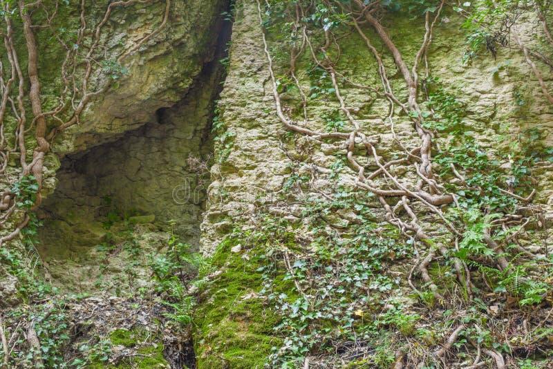 Skrevan i vagga och trädet rotar royaltyfria foton