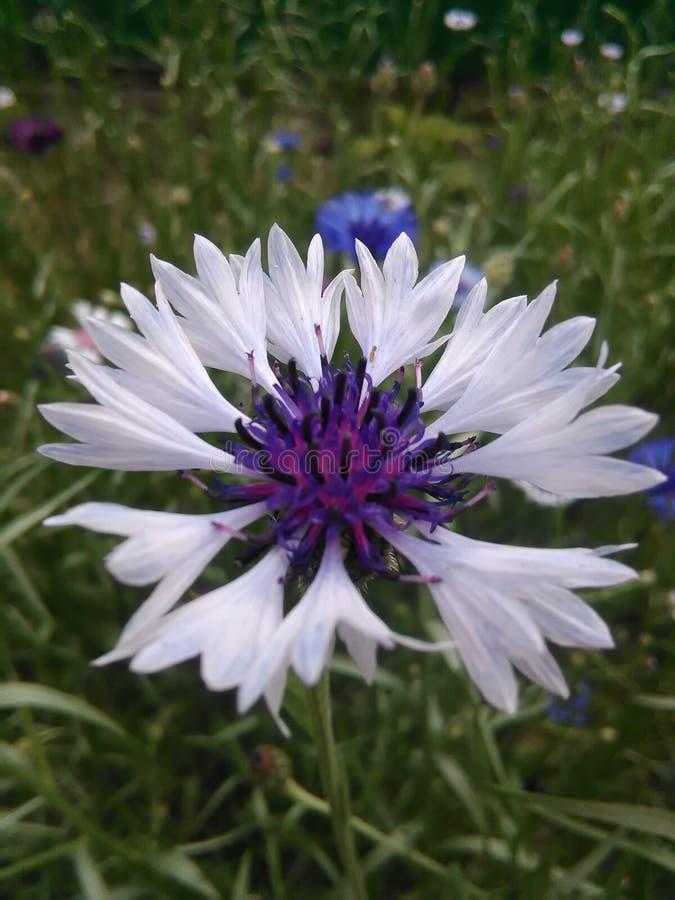 Skriv blomman fotografering för bildbyråer