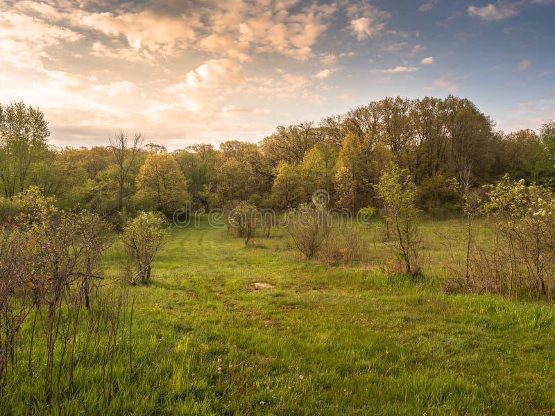 Skrivande in guld- morgonsoluppgång över Forest Patway arkivfoton