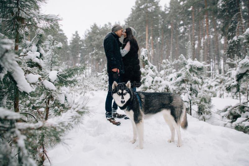 Skrovlig förälskade hund och kyssande par fotografering för bildbyråer