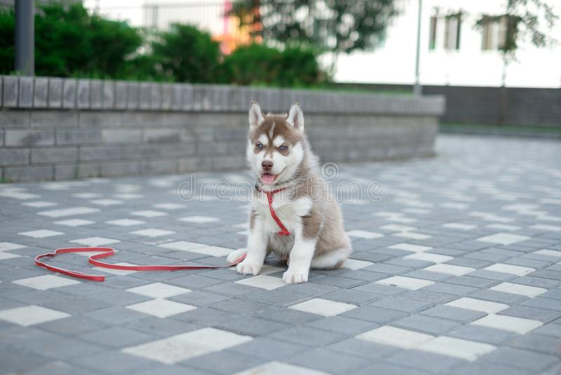 Skrovlig hund för liten valp på gatan arkivfoto