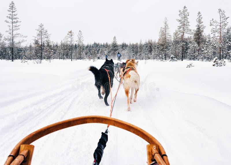 Skrovlig hundkapplöpningsläde i Finland Lapland i vinter royaltyfri fotografi