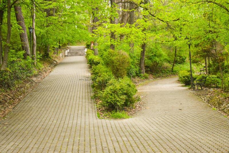 Skrzyżowanie dwa alei w parku wśród drzew i krzaków Duża aleja splitted w dwa małych ścieżkach Jeden aleja iść w górę obrazy stock