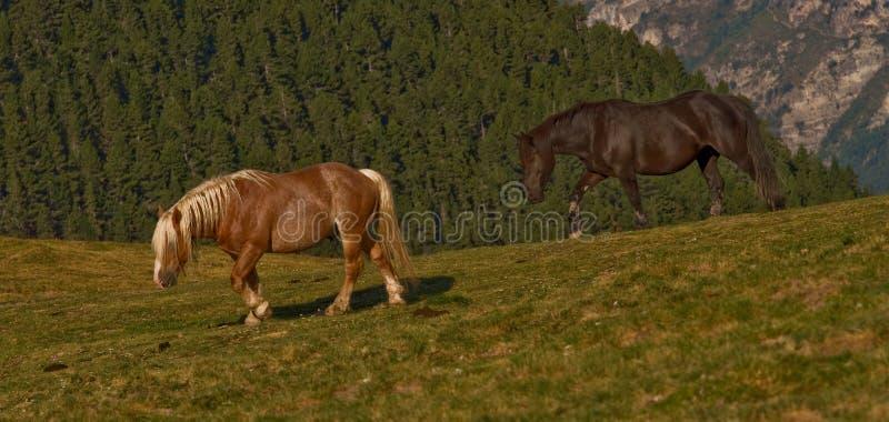 skrzyżowanie konia obraz royalty free