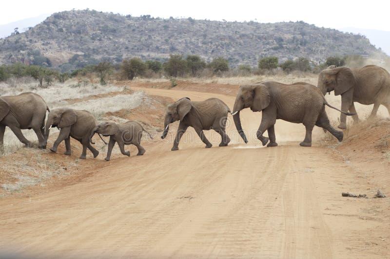 skrzyżowanie słonia drogowego fotografia stock