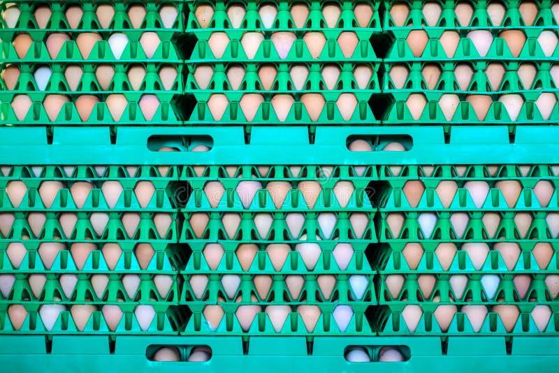 Skrzynki z świeżymi jajkami na organicznie kurczaka gospodarstwie rolnym zdjęcie royalty free