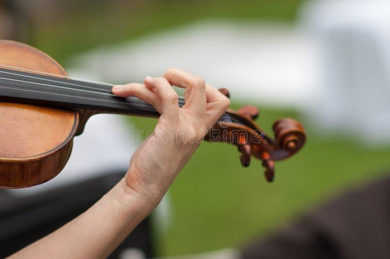 skrzypce zdjęcia stock