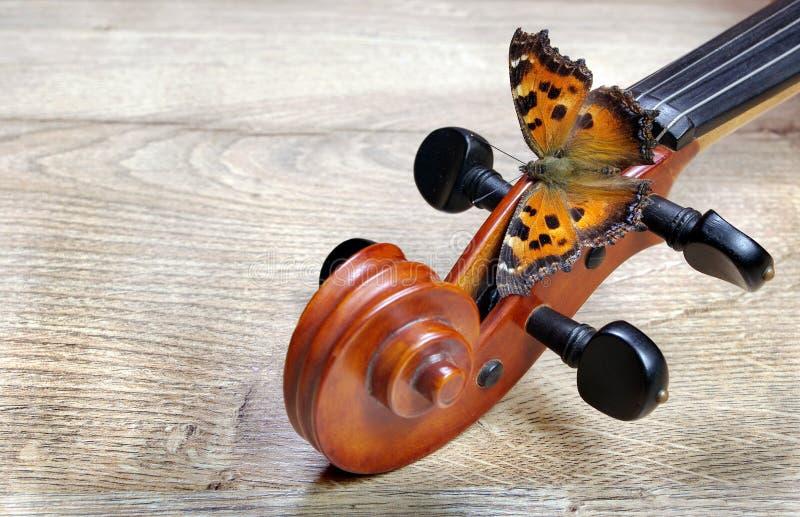 Skrzypce i motyl Admiral motyl Odgórny widok Kopii przestrzenie zdjęcia royalty free