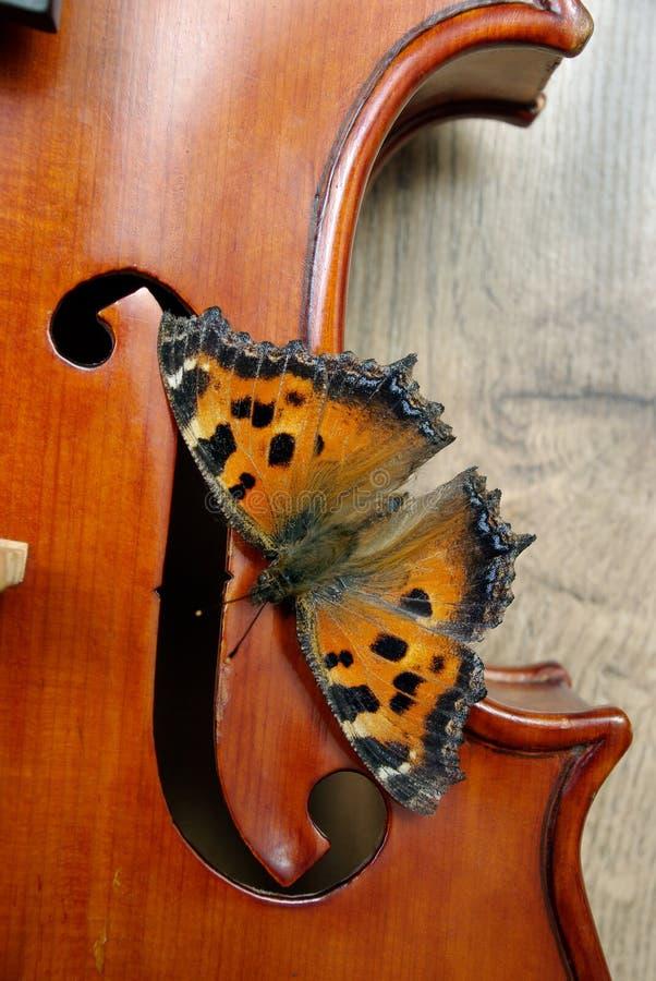 Skrzypce i motyl Motyli wielki tortoiseshell zdjęcia royalty free