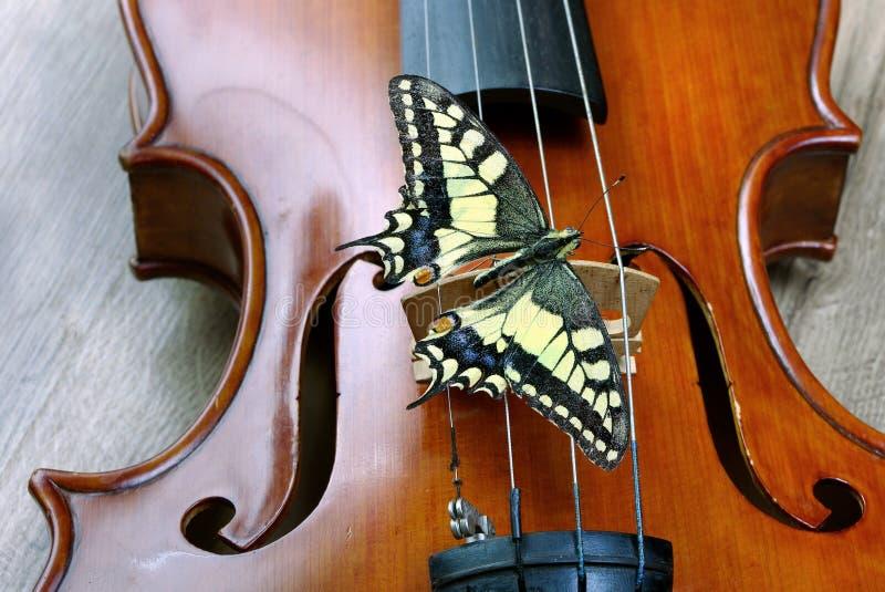 Skrzypce i motyl na drewnianym stole swallowtail motyla Papilio machaon obrazy royalty free