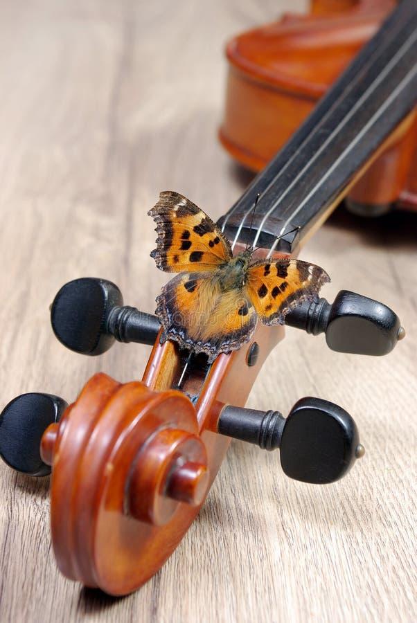 Skrzypce i motyl na drewnianym tle szyja skrzypcowy zakończenie up Motyli wielki tortoiseshell zdjęcia royalty free