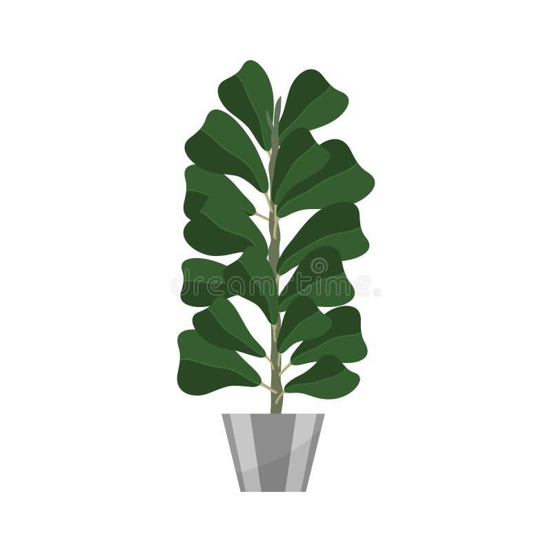 skrzypki Deciduous roślina w flowerpot Domowej rośliny realistyczna ikona dla wewnętrznej dekoraci Iglasta roślina w flowerpot royalty ilustracja