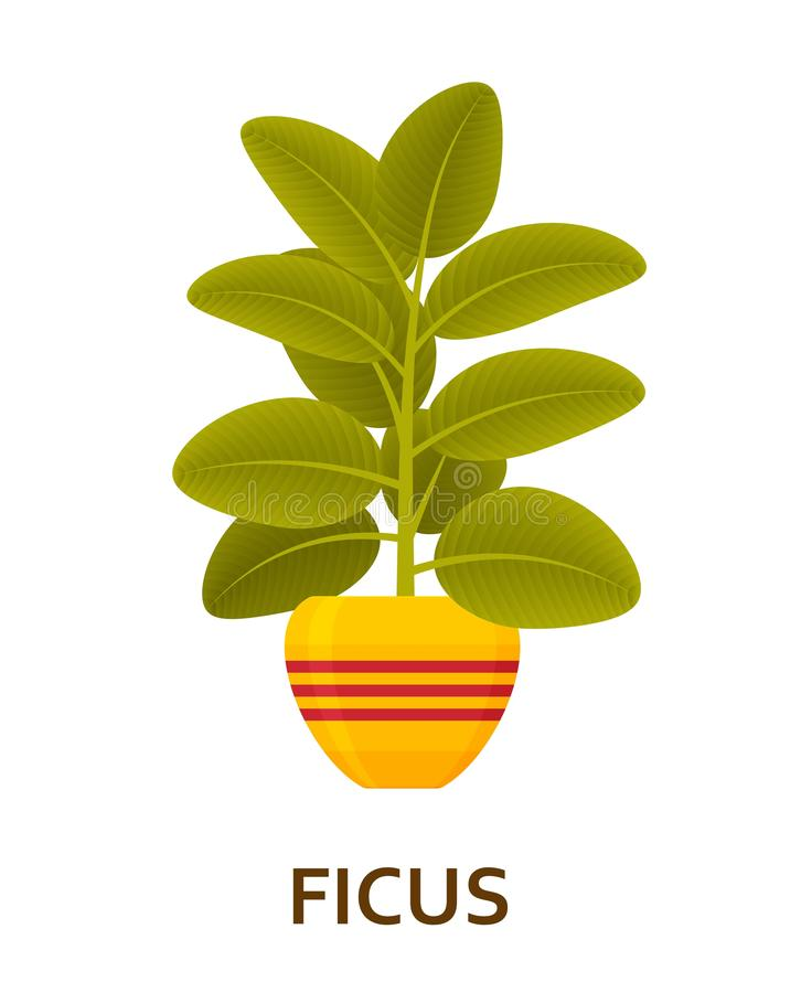 skrzypki Dekoracyjny houseplant w garnku Kwiaciarni salowy drzewo lub wnętrza flowerpot również zwrócić corel ilustracji wektora ilustracja wektor